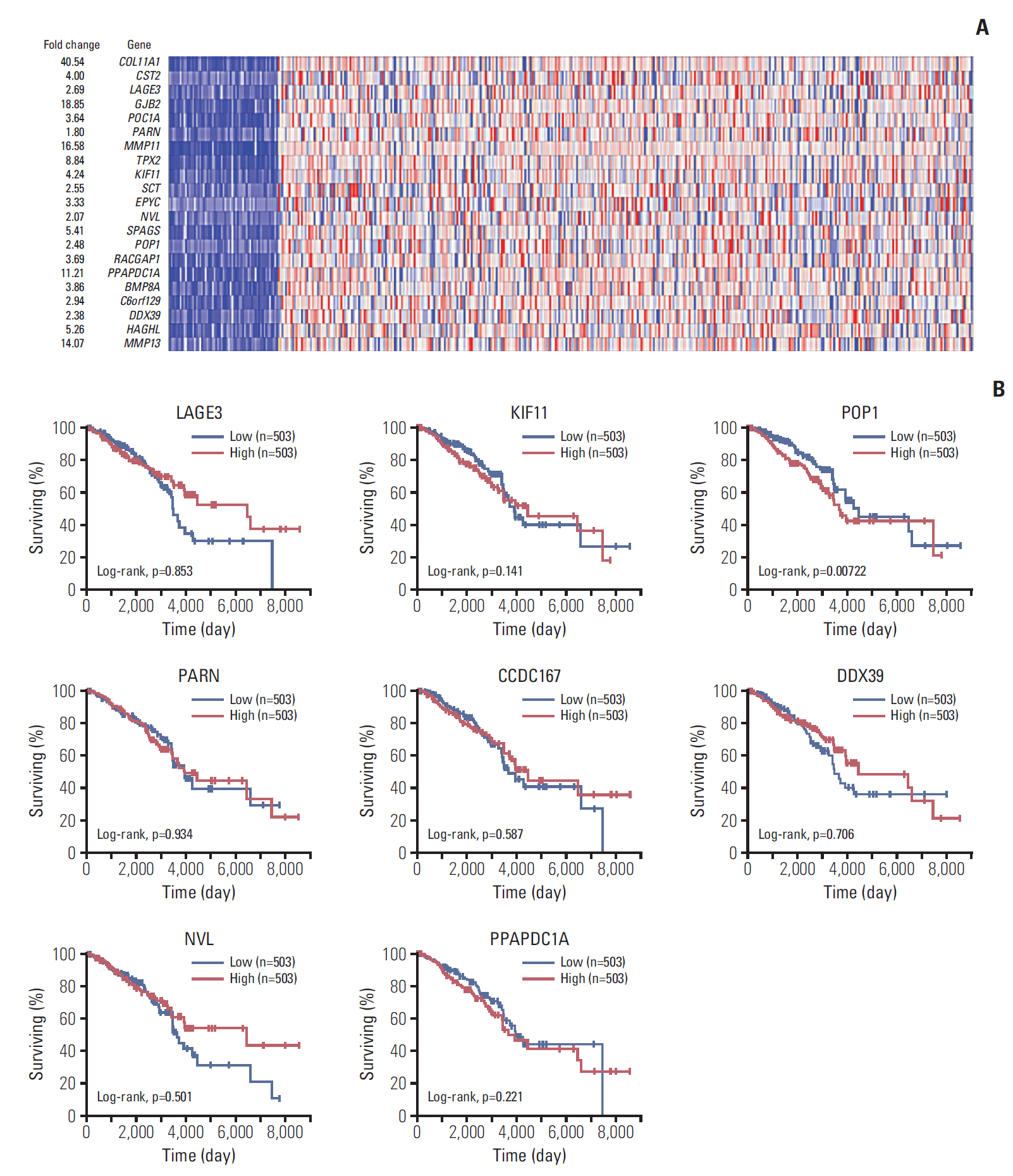 KIF11 Functions as an Oncogene and Is Associated with Poor Outcomes